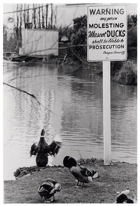Mascot Ducks, UO Archives Photographs