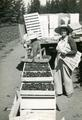 Two members of the Oregon State Horticultural Society harvesting broccoli [?], ca 1960.