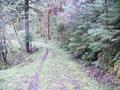 Santiam Wagon Road (Sisters, Oregon)